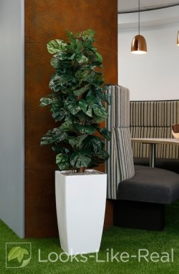 Cheese Plant on Pole 1600/500mm Artificial Office Plant