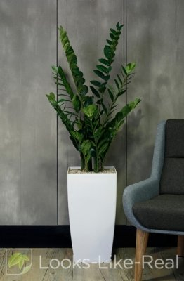 Arum Fern 1500/550mm Artificial Office Plant