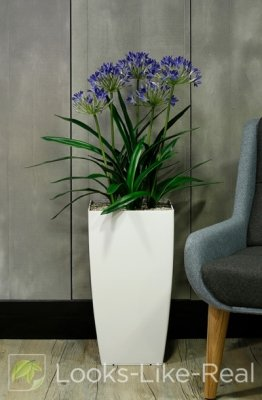 African Lily (Blue) 1150/650mm Artificial Office Plant